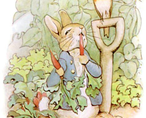 Il coniglio Piglio